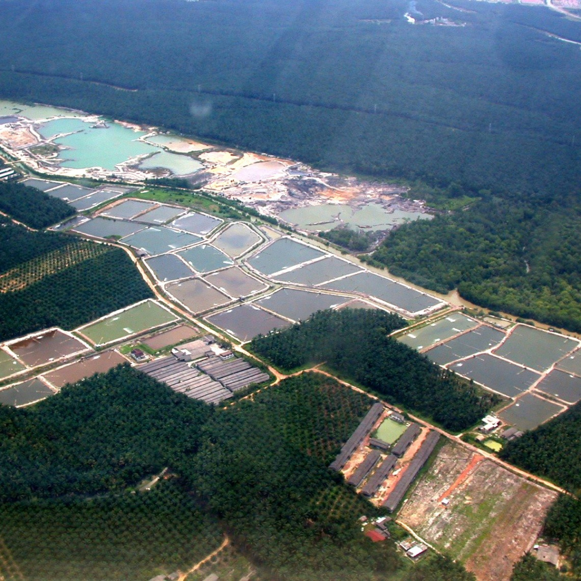 shrimp-farm-aerial-original